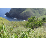 Sea Change - Kelby's Ridge - Saba Island Premier Properties