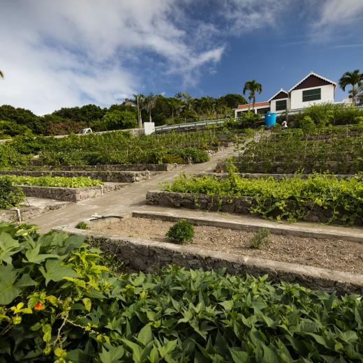 Saba Island Premier Properties - Organic Garden