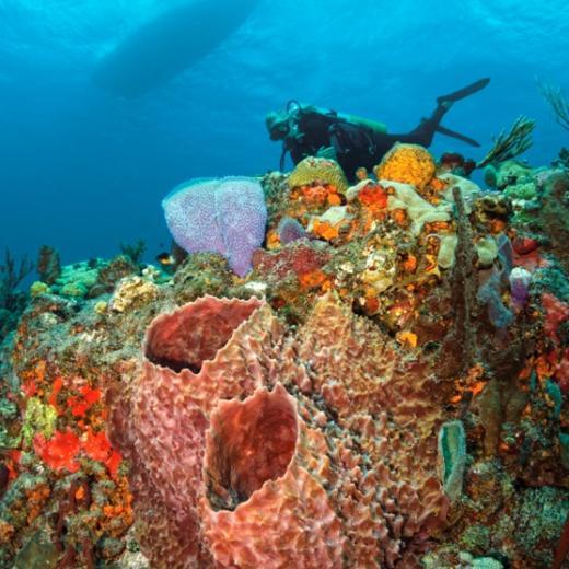 Dive Saba