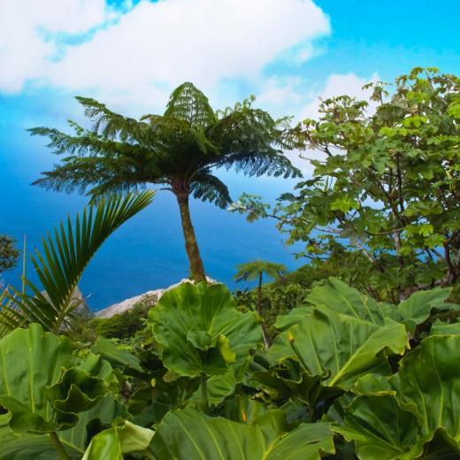 Beautiful Saba Island