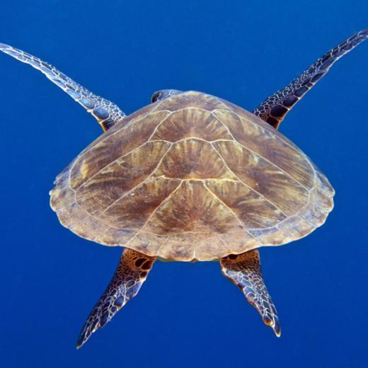 Dive Saba Island
