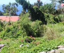 Booby Hill Bliss - Saba Island Premier Properties