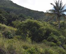 Parrot Cliff - Saba Island Premier Properties