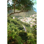 Barnesland Home Place - Saba Island Premier Properties