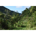 Gladys' Saban Homestead - Flat Building Site - Saba Island Premier Properties