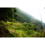 Pointe Paradise - Gentle Slope Side Elevation - Saba Island Premier Properties