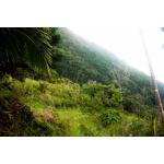 Pointe Paradise - Gentle Slope Side Elevation - Saba Island Premier Properties