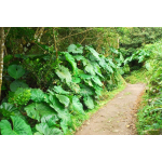 Rustige Dromen - Saba Island Premier Properties