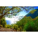 Cottage Verena - Saba Island Premier Properties